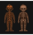 Human Body Anatomy Set Skeletonand Nervous vector image
