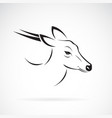 barking deer or muntjac muntiacini on white vector image vector image