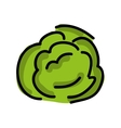 cabbage fresh isolated icon design vector image
