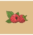 Raspberry in vintage style Colored vector image vector image