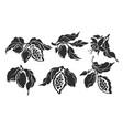 cocoa set botanical hand drawn design vector image