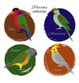 colorful parrot icon set vector image vector image