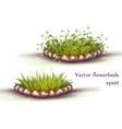flowerbed with grass and flowers vector image