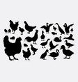 rooster hen and duck silhouette vector image