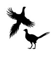 silhouettes pheasant set icons flying and vector image