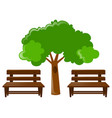 two wooden seats and tree vector image