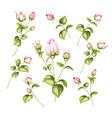 vintage flowers set vector image vector image