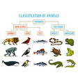 classification of animals reptiles amphibians vector image