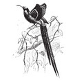 great sickle bill bird of paradise vintage vector image vector image