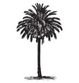 date palm vintage vector image vector image