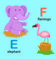 isolated alphabet letter e-elephant f-flamingo vector image vector image