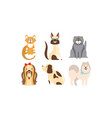 cats and dogs different breeds set cute pets vector image vector image