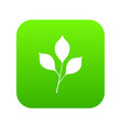 cherry leaves icon digital green vector image