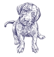 dog puppy hand drawn illustration realistic vector image vector image