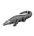 hand drawn crocodile black-white figure vintage vector image vector image