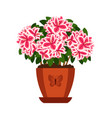 azalea hoseplant icon vector image