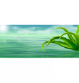 aloe vera on water surface background vector image