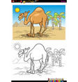 cartoon camel on desert coloring book vector image vector image