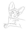 cat portrait lines vector image vector image
