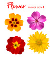 colorful flowers vector image vector image