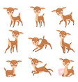 cute badeer adorable brown forest animal set vector image vector image