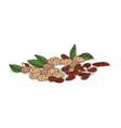 isolated clipart almond vector image