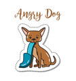 fashion patch element angry dog vector image vector image