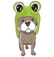 Dog in froggy hat vector image vector image