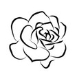 line drawing black roses in a white background vector image