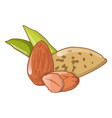 almond nuts icon cartoon style vector image