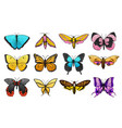 collection of colorful butterfly or wild moths vector image vector image
