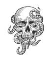 octopus in human skull vector image vector image