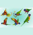 rainbow lorikeet vector image vector image
