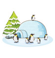 scene with penguins and igloo vector image vector image