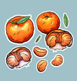 set of color cartoon stickers of tangerine the vector image vector image