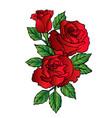 rose flower red cartoon 03 vector image