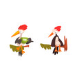 woodpecker bird sitting on tree branch set funny vector image vector image