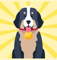 bernese mountain dog with award on neck isolated vector image vector image