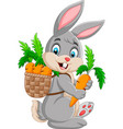 easter bunny carrying basket full of carrots vector image