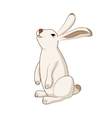 Rabbit cute hare bunny isolated vector image vector image