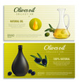 realistic olives oil banners vector image vector image