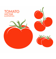 Tomato Isolated vegetables on white vector image vector image