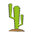 cactus draw vector image vector image