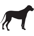 Great Dane Silhouette vector image vector image