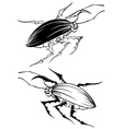 two stylized beetle vector image vector image