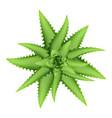 aloe vera plant top view icon cartoon style vector image