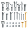 assortment of metal screws in set vector image