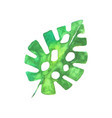 green tropical monstera leaf watercolor vector image