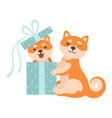 two cute shiba inu dogs one dog sitting in gift vector image
