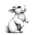 rabbit sketch artistic graphic image vector image vector image
